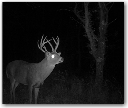 2016-2017 deer hunting regulation changes