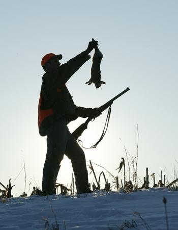 Tips for Hunting Rabbits