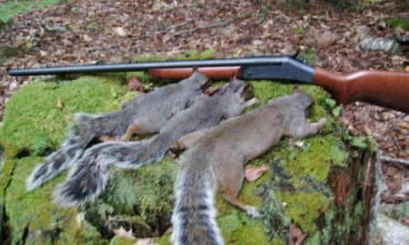 Useful Squirrel hunting tips