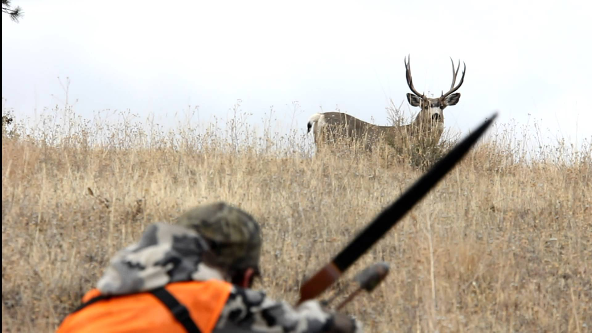 Tips On Hunting The Deer-Use The Bow