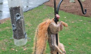Powerful Gun Of Hunting Squirrel The Best And Most