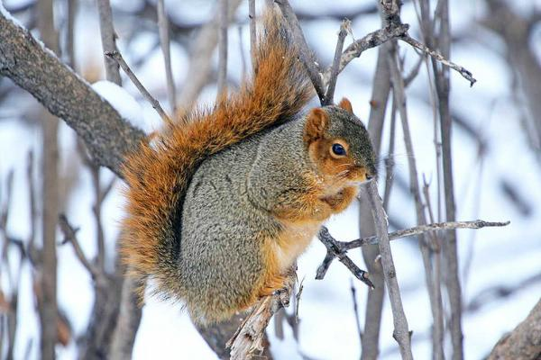 4 Steps To Hunting the Squirrel In Cold Day