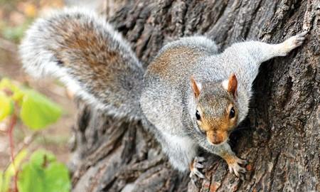 4 useful spring squirrel hunting rule 01