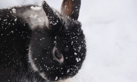 Useful rabbit hunting tips for winter season 01