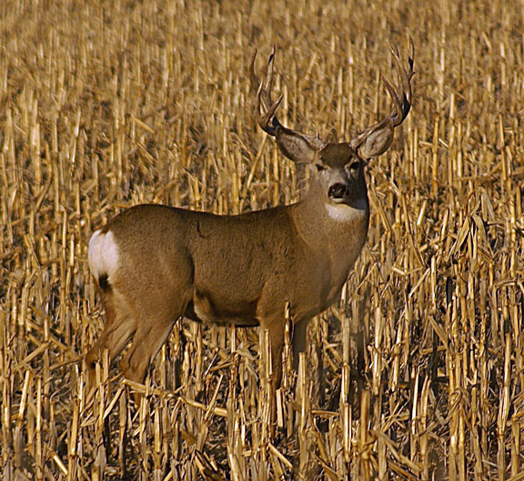 4 Mistakes You Should Know About Deer Hunting