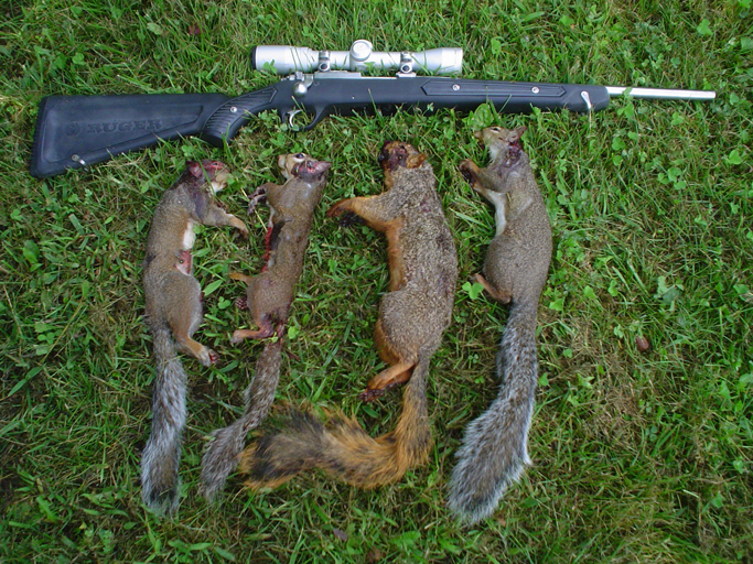 Sqirrel hunting tips for early season