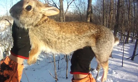 How to hunting the Cottontails 02