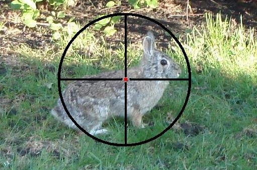 How to shoot the rabbit in hunting game