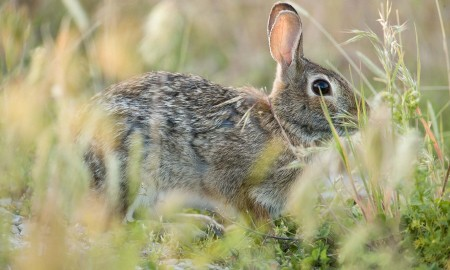 7 useful rabbit hunting tips 02