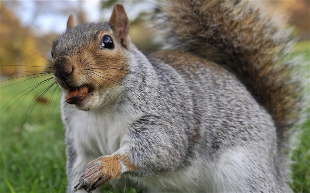 Tips to help you how to use the squirrel call 02