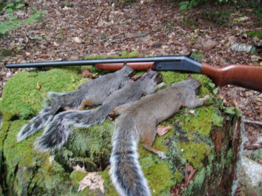 5 problems that squirrel hunters should not do