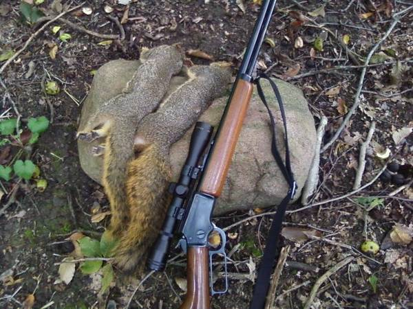 How to hunt a squirrel with a shotgun