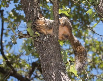 5 problems that squirrel hunters should not do 02