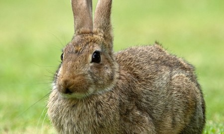 simple hunting ideas for rabbit hunters