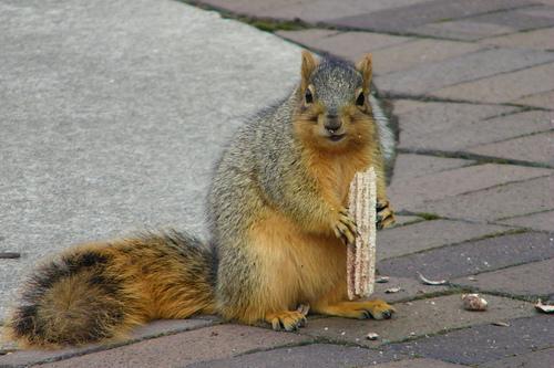Useful hutning squirrel hunting skill