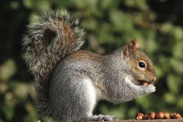 Useful hutning squirrel hunting skill 02