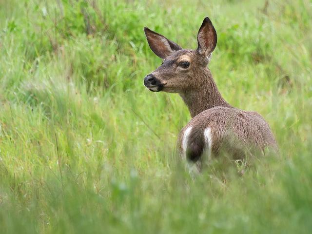 Top5 skill help you hunt a black tail deer