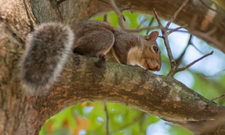Squirrel warm season hunting tips