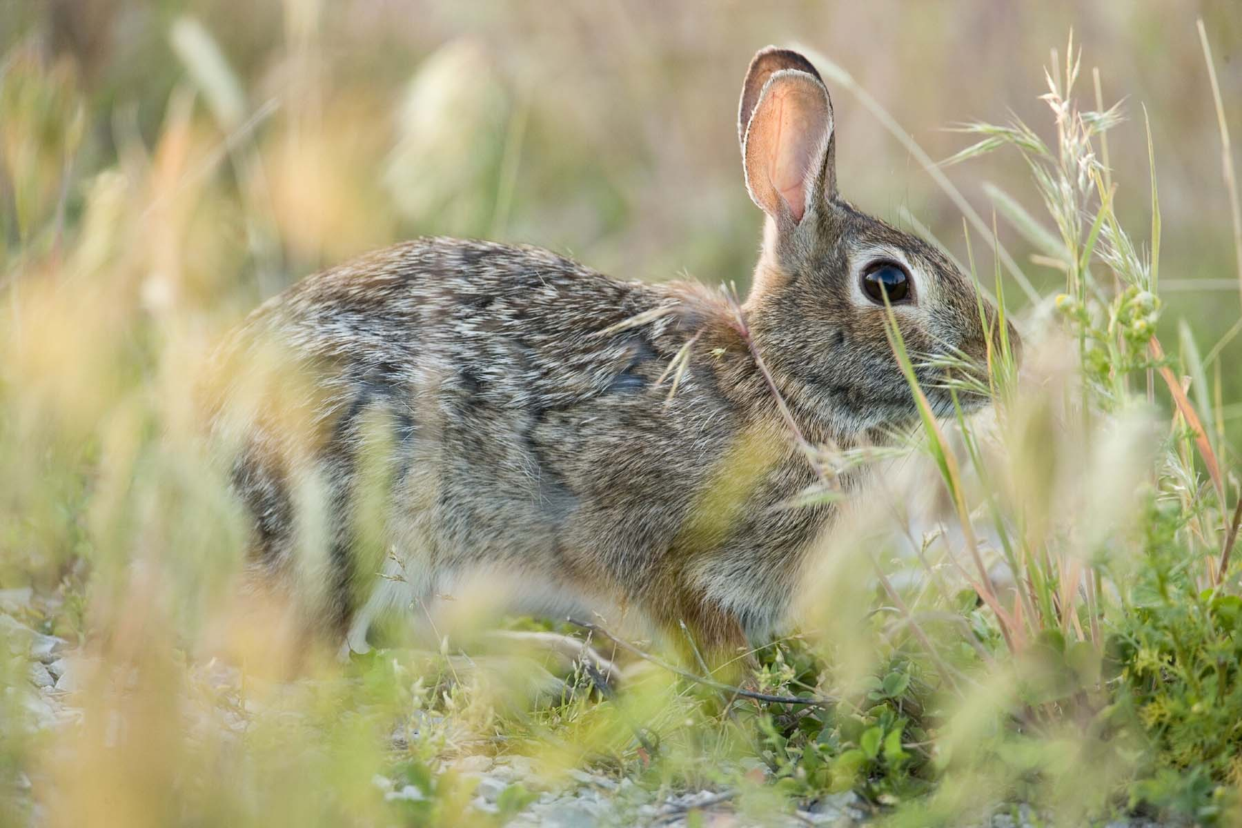 Usefuil rabbit hunting tips you should know