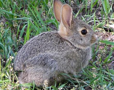 Usefuil rabbit hunting tips you should know 02