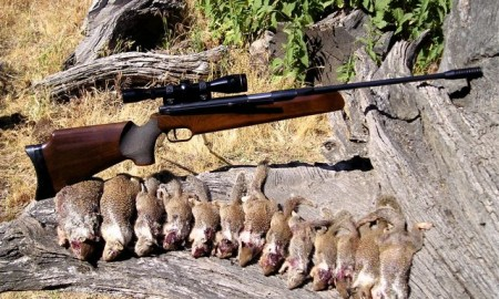 The Accurate Squirrel Rifle