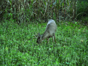 Crunch Time Tips For Whitetails