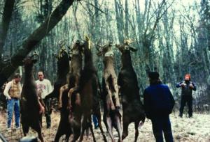 hunter and deer