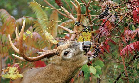 a deer