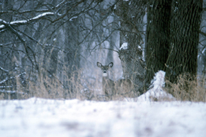 How do deer survive the winter