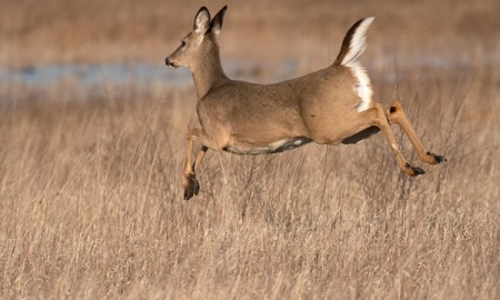 How to hunt Whitetails with a bow