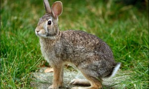 Simple Tips About Rabbit Hunting