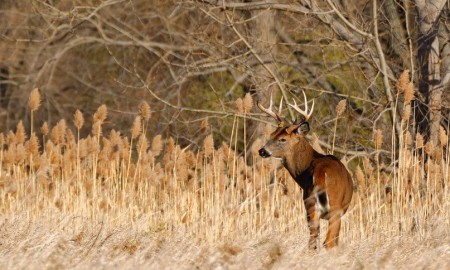Read Those Helpful Deer Hunting Tips ,You Will Success