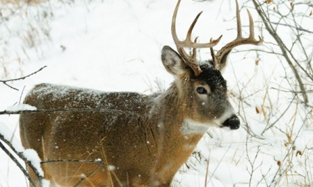 Useful tips for deer hunting in winter