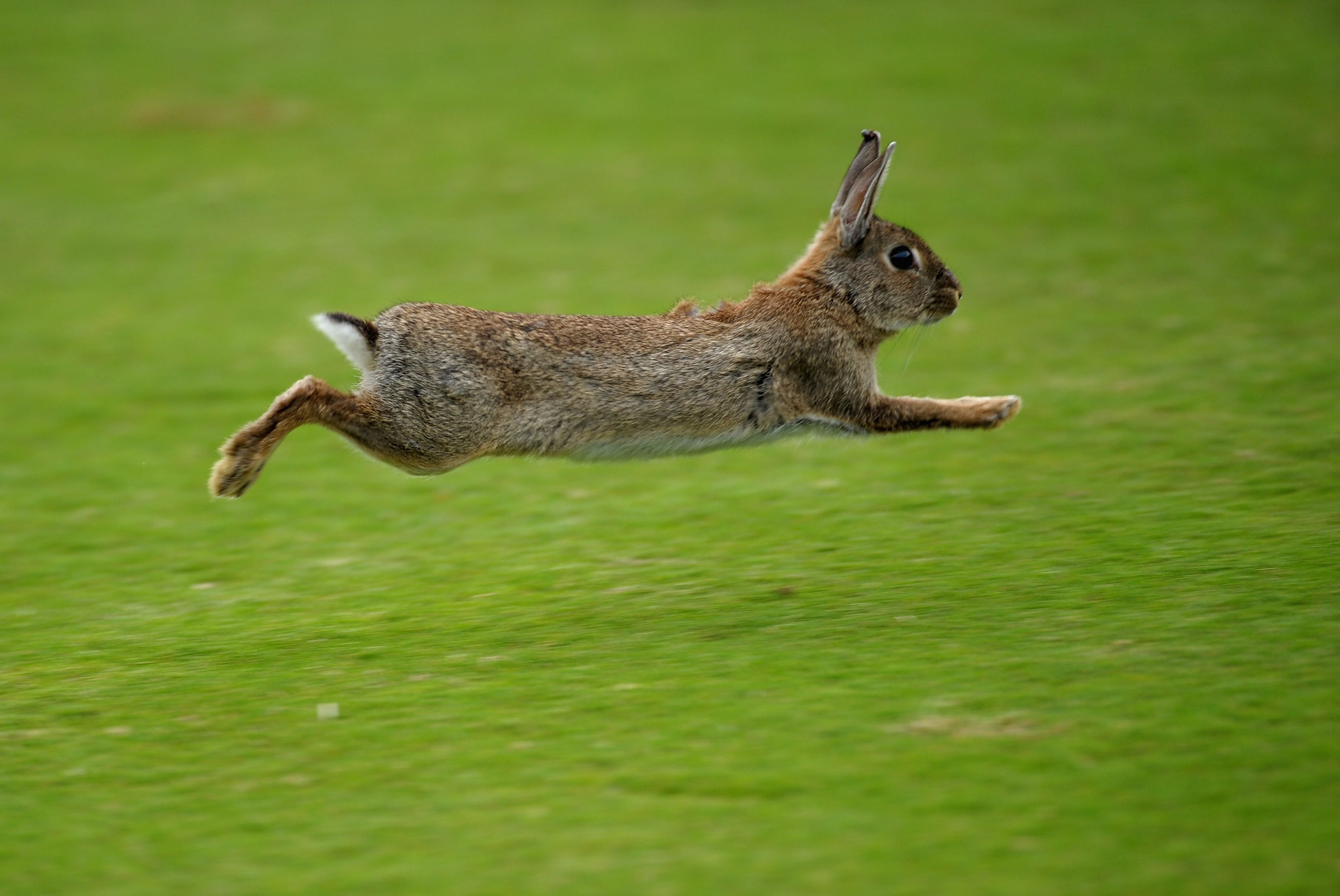 Useful Tips To Help You Arrest The Rabbit