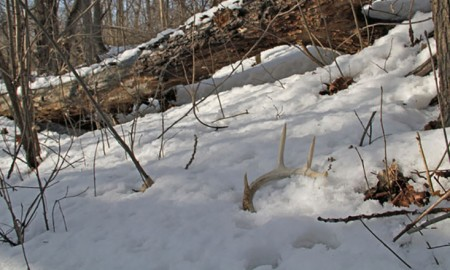 where to find your shelter for hunting the deer 01