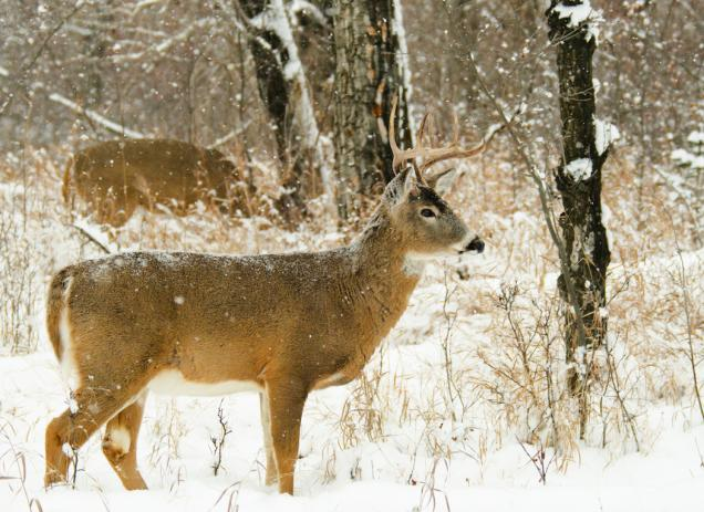 6 tips you have to know for cold hunting day 02
