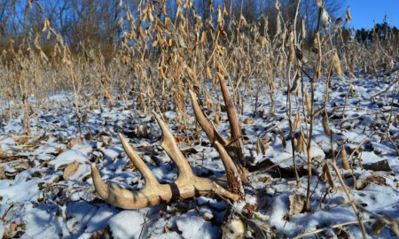 6 tips help you catch the deer in offseason 02