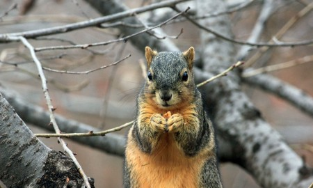 Squirrel hunting tips for beginning hunters