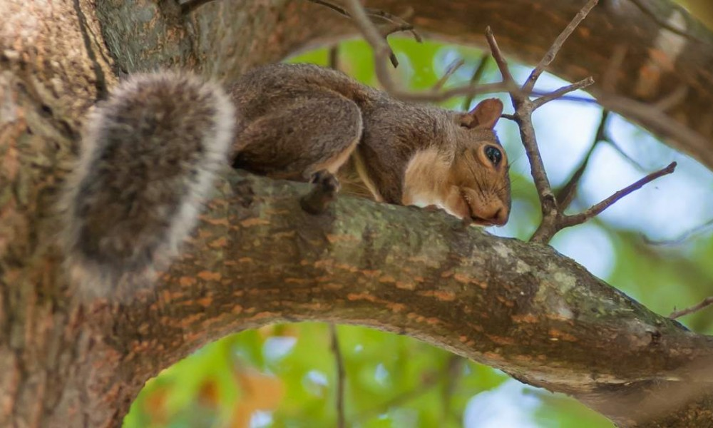 Squirrel warm season hunting tips
