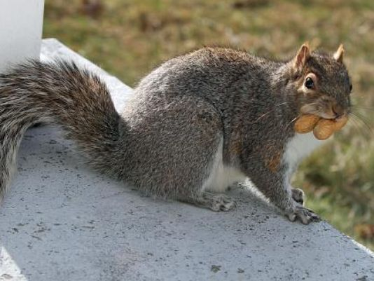 Simple tips for you to hunt hte squirrel