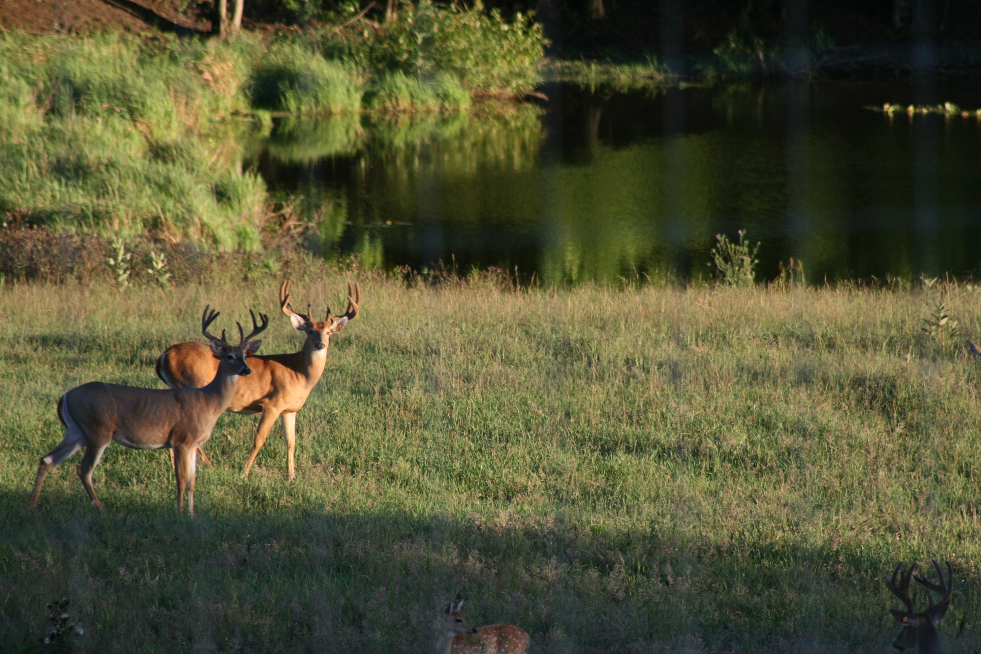 How to hunt a deer in public land