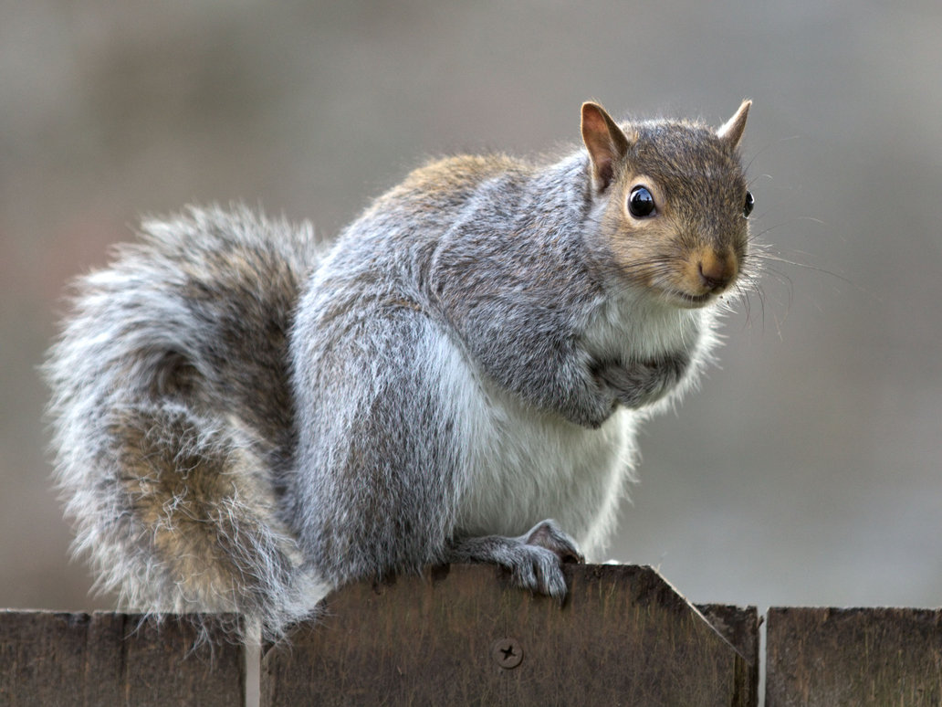 Hunting Tips For Youth How To Catch The Grey Squirrel