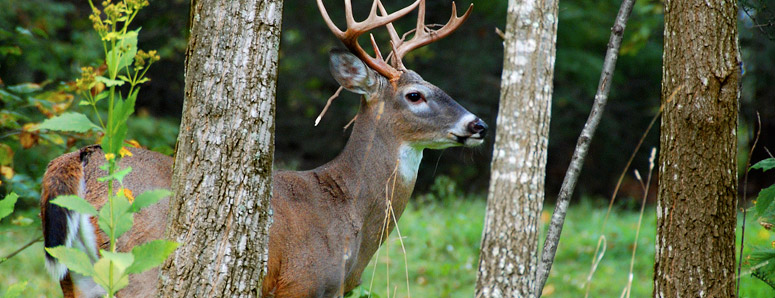 How to improve the chances of der hunting tags 03