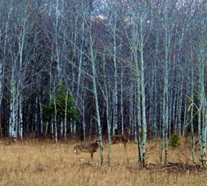 Deer Hunting In Rainy Day