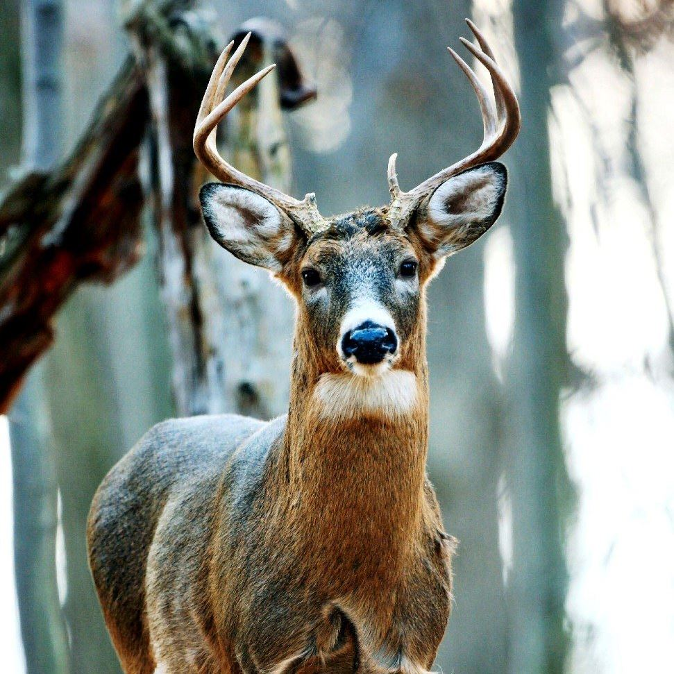 Different Shot Placement For Deer Hunters - The Best And ...